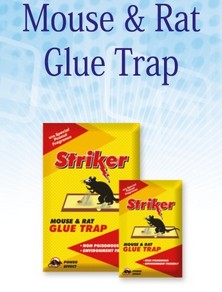 Striker - Rat Trap